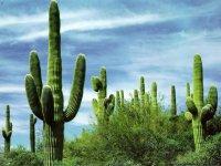 Документи для відкриття візи в Мексику