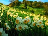Долина Нарцисів та таємниче Закарпаття 795 грн